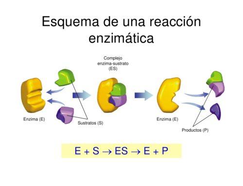 Que son los cosmeceuticos y enzimas de pbserum